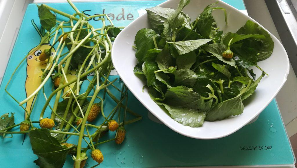 Préparation des feuilles de brèdes mafane