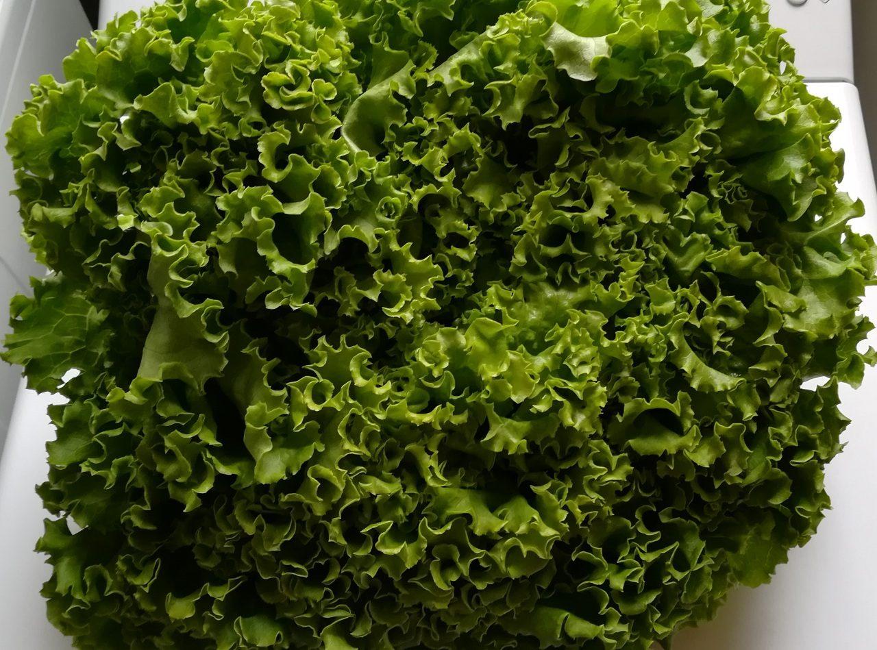 salade verte préparation