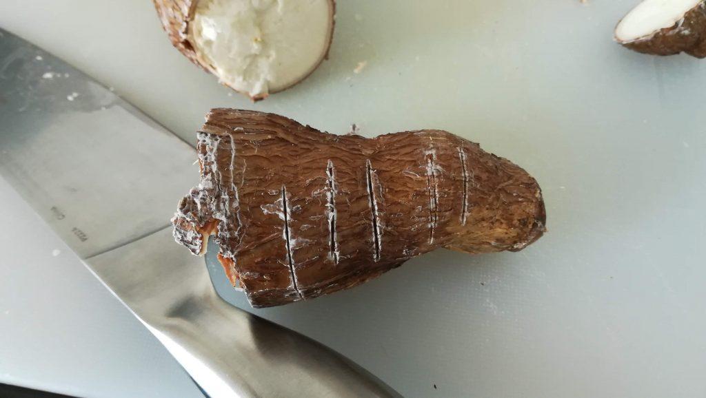 Racine de tapioca