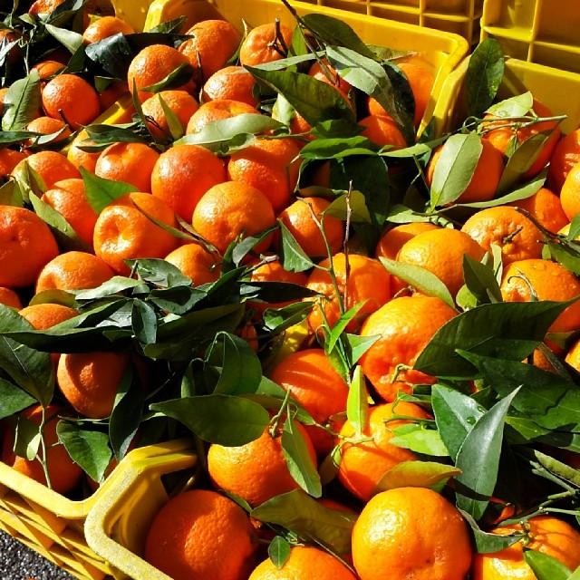 Les clémentines sont des fruits de saison