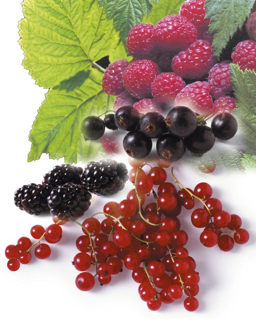 Les fruits rouges sont des fruits d'été