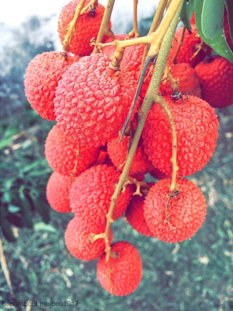 Les litchi sont des fruits importés