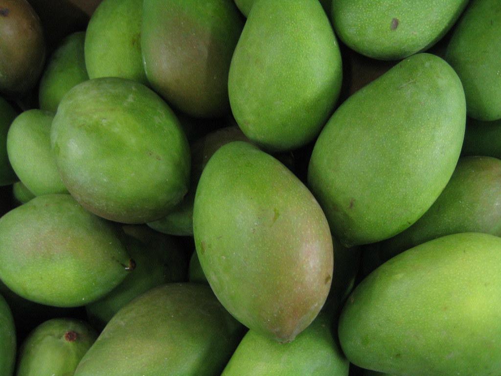 Les mangues vertes sont hors saison